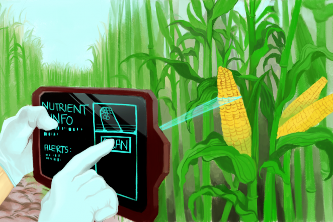 Speedy new scanner can detect nutrients in produce, disease in crops