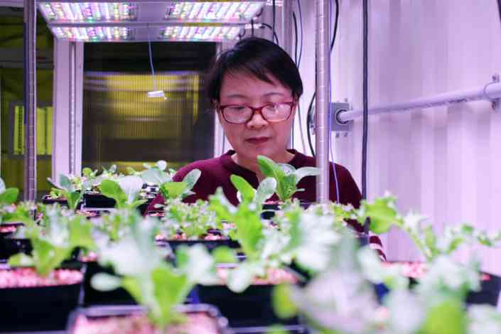 Next frontier of agriculture? Produce high-quality food in urban areas