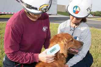 Microchip may help responders monitor search-and-rescue dogs