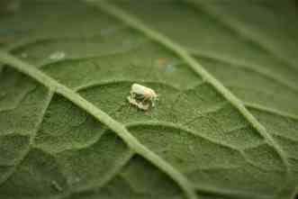 Can wasps and mites control pests, protect plants in greenhouses?