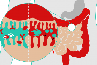 Two-faced bacteria: Team solves mystery within gut's microbiota