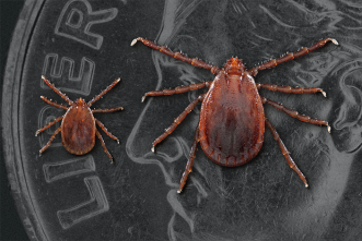 Tick surveillance and  control needed in United States, A&M study shows