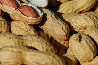 Breeding peanuts: Study identifies faster way to check for healthy traits