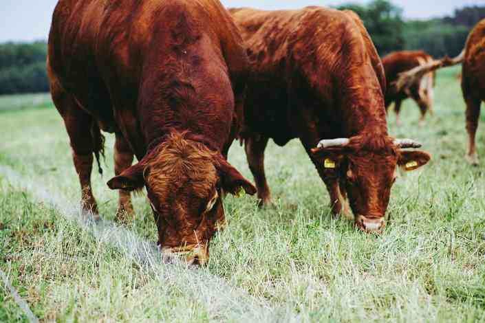 Can we produce more animal protein without damaging the environment?