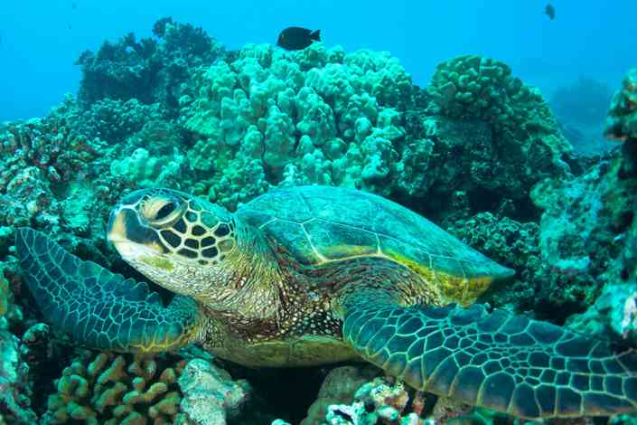 The Gulf Center for Sea Turtle Research