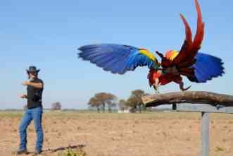 Unfriendly skies: 'Kernel flocks' can teach survival behaviors to parrots